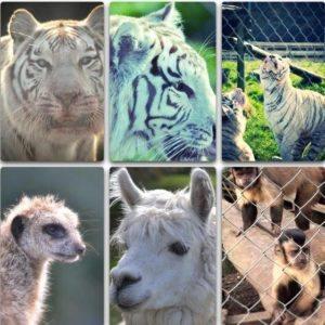 pouakai-zoo